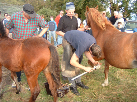 The blacksmith measures the horse's hoof as he prepares to make the horseshoe